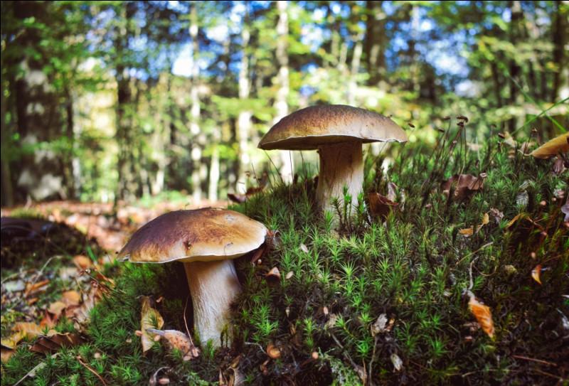 L'ensemble des champignons d'un lieu déterminé :