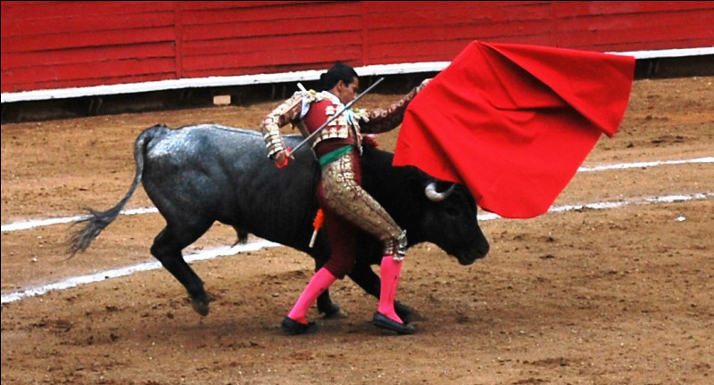 En tauromachie, ensemble des passes exécutées avec la muleta (le tissu rouge) :