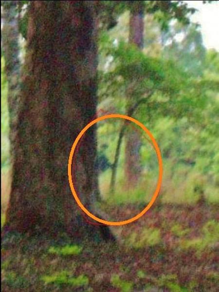 Là ! Comme ça, vous ne pourrez plus dire qu'on ne raconte que des foutaises dans les quiz : voici une vraie photo de fantôme sur le site de la bataille de ...