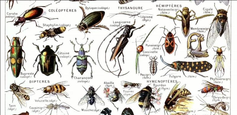 Quel est le nom de la science qui étudie les insectes ?
