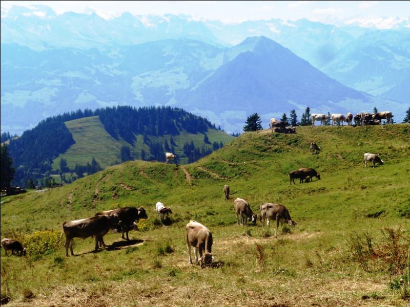 Dans quel département auvergnat pourrez-vous admirer le Puy de la Vache ?
