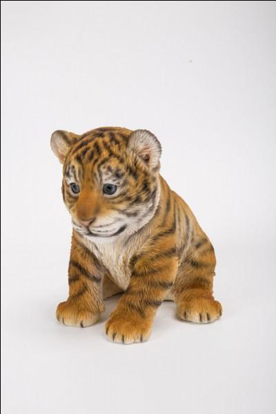 Comment s'appelle le petit du tigre ?