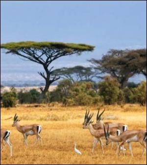 C'est un pays aride situé au sud de son continent qui a comme capitale Pretoria, c'est..