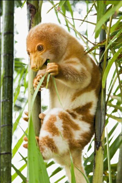 Cet animal porte le nom d'une spécialité gastronomique célèbre, c'est l'andouillette !
