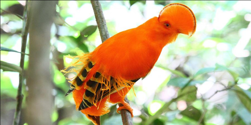 On peut admirer cet oiseau en Afrique !