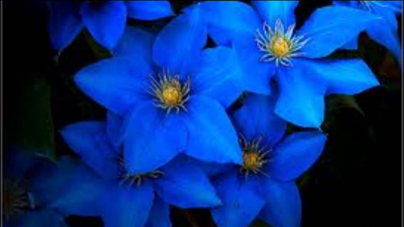 Quelle est la couleur de ces fleurs ?