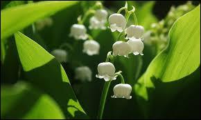 Quelle est la fleur incourtournable du 1er mai ?