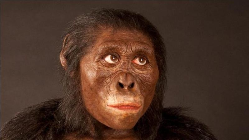 À quel groupe doit-on le nom de la célèbre australopithèque Lucy ?