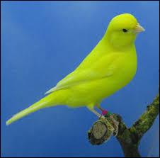 Associez cet oiseau à un personnage de dessin animé !