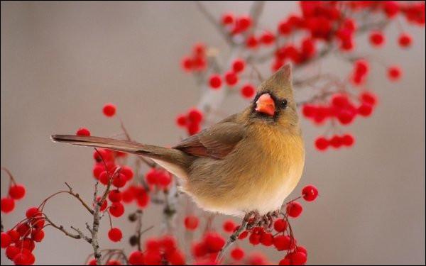 Si je suis une personne étourdie, à quel oiseau va-t-on comparer ma tête ?