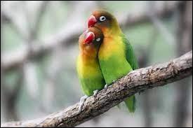 Quel oiseau utilise-t-on pour désigner des jeunes amoureux ?