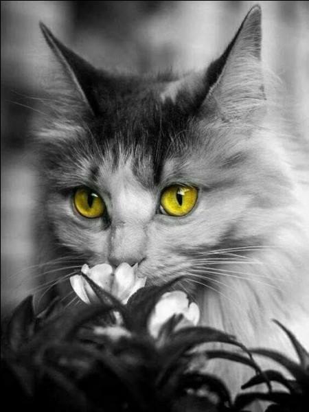 Qu'est-ce qu'un chat haret ?