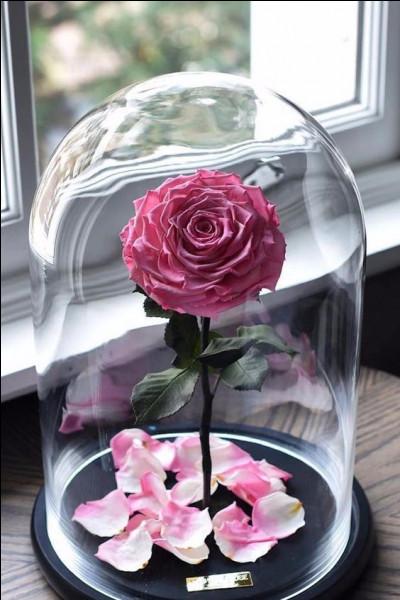Dans laquelle de ces œuvres littéraires, une rose est-elle enfermée sous un globe de verre ?
