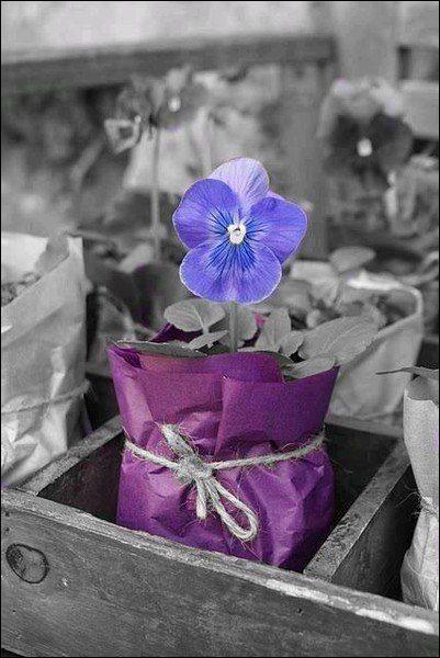 Quelle fleur est présentée sur la photo ?