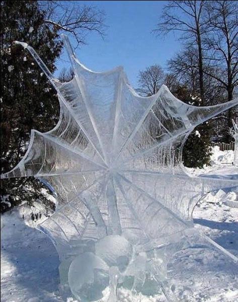 Parmi les races d'araignées, quelle est la particularité de l'argyronète ?