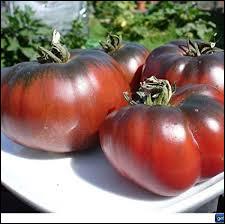 Comment se nomme cette variété de tomate ?