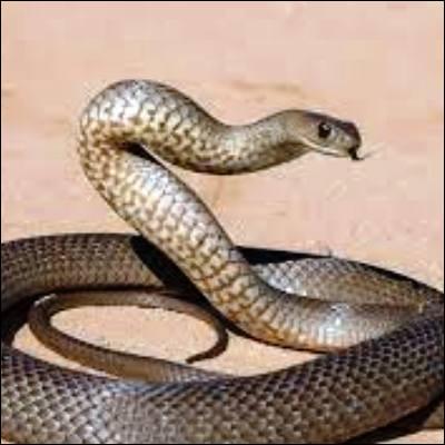 """Quel acteur, césarisé en 2010 pour son rôle dans """"Un prophète"""", incarne un tueur en série dans la mini-série de 2021 """"Le Serpent"""" ?"""