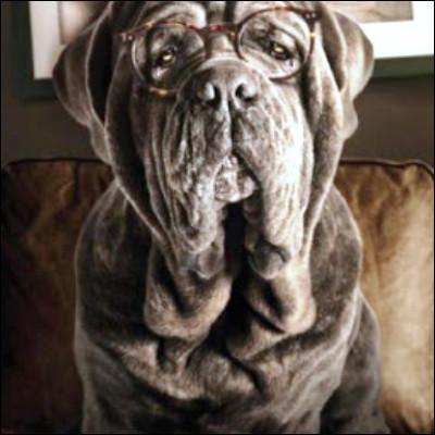"""Quel écrivain américain du mouvement réaliste sale est l'auteur du roman """"Mon chien Stupide"""" ?"""