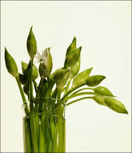 Avec quelle autre plante est souvent confondu le muguet ?