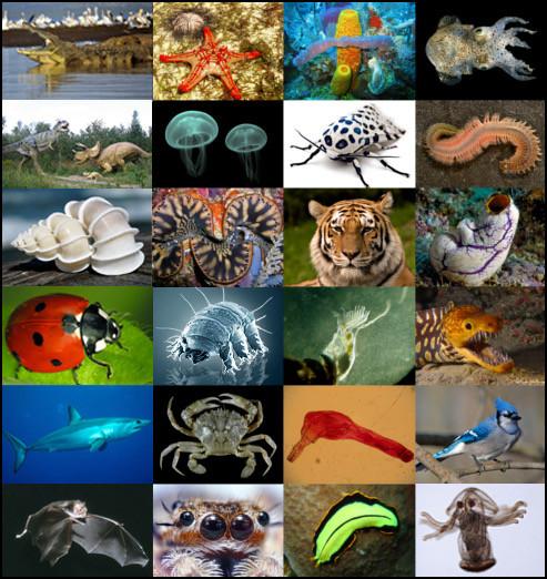 Quel animal aimes-tu le plus dans cette liste ?