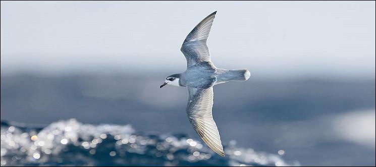 Quand le prion n'est pas un oiseau de mer, qu'est-il donc ?