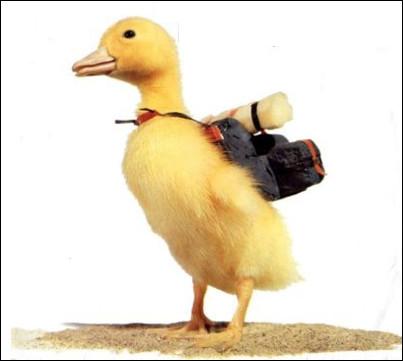 Qui est ce personnage, un canard jaune vedette d'une série télévisée de 1965 à 1970, pendant 78 épisodes ?