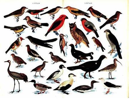 Les oiseaux de fiction