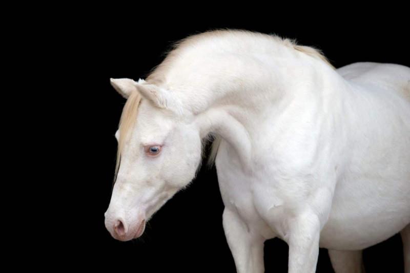 Cet animal est...