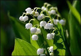 Comment se nomme cette fleur associée au 1er mai ?