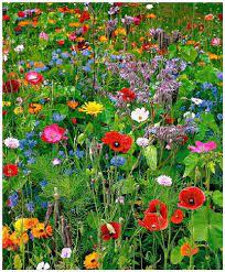 Quelques fleurs à reconnaître