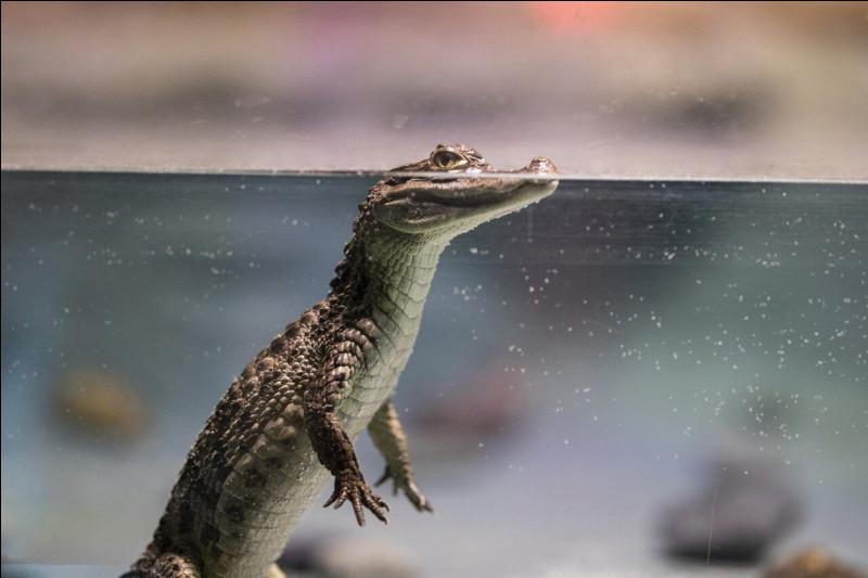 Quel État des États-Unis est infesté d'alligators ?