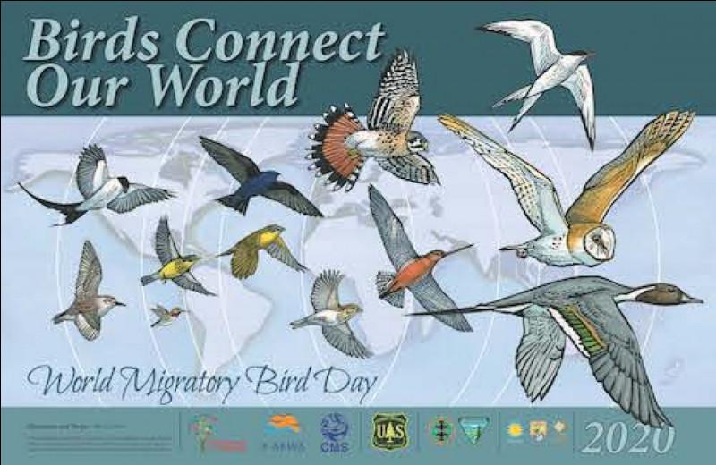 Lequel de ces oiseaux est un oiseau migrateur ?