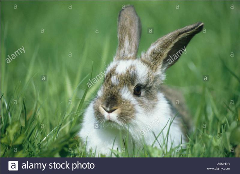 Comment se nomme le domicile du lapin ?