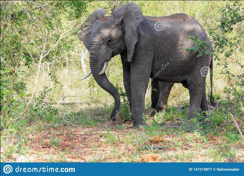 """On peut me voir dans """"Un éléphant, ça trompe énormément"""". Mon nom est..."""