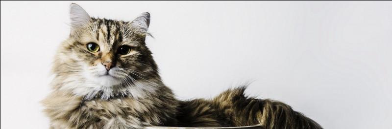 """Je tiens un rôle dans le film """"Le Chat"""". Qui suis-je ?"""
