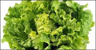 Quelle est cette variété de salade ?
