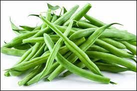 Quel est le nom latin du haricot vert ?