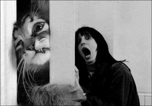 Cette photo est un montage dans lequel le chat remplace l'acteur nommé...