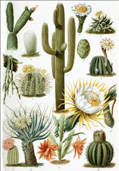 """Qui chante """"Les Cactus"""" ?"""