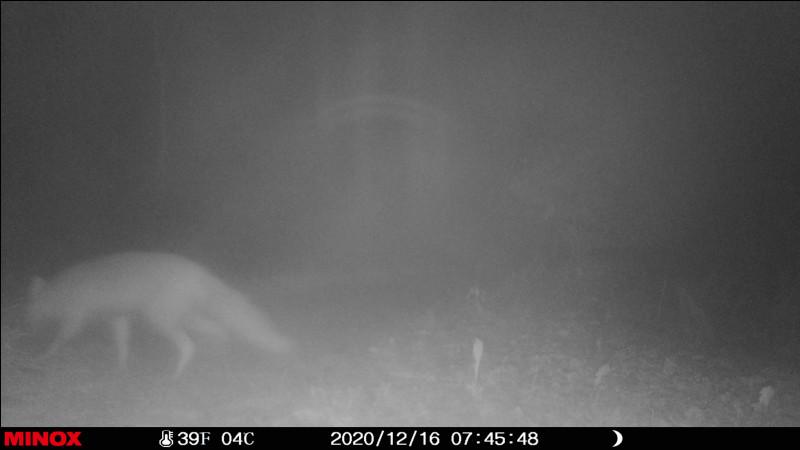 Terrier peu profond, où la lapine de garenne dépose ses petits !