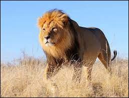 """Quel groupe a repris dans les années 90 la chanson """"Le lion est mort ce soir"""" d'Henri Salvador ?"""