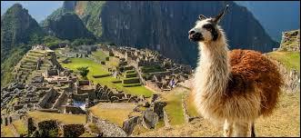 À quelle famille de mammifères le lama appartient-il ?