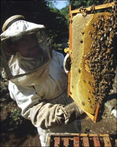 Comment appelle-t-on la personne qui élève des abeilles ?