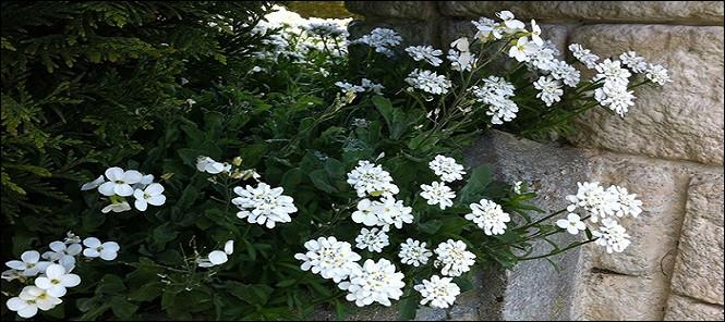 Quel est le nom attribué à ces fleurs ?