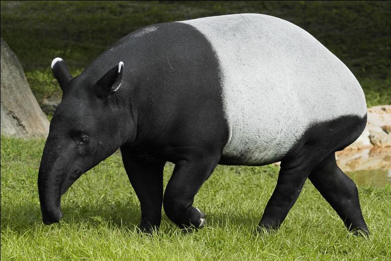 Quel est ce mammifère au corps massif et à la peau très épaisse qui a une courte trompe lui permettant d'attraper sa nourriture ?