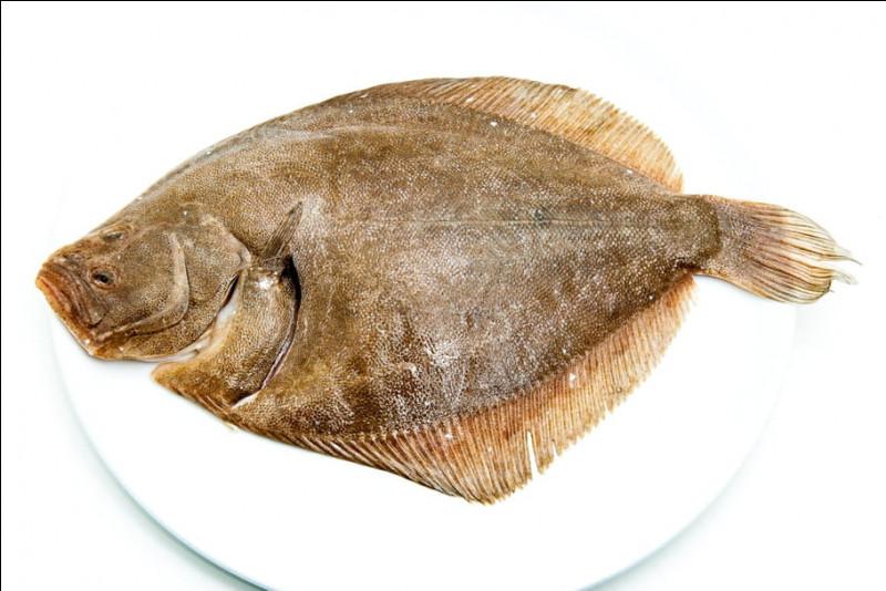 Quel est ce grand poisson carnivore, plat et rare, très recherché pour la finesse de sa chair.Sa peau est sans écaille mais avec des tubercules osseux ?