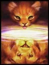Quelle est la prophétie concernant Étoile de Feu ?