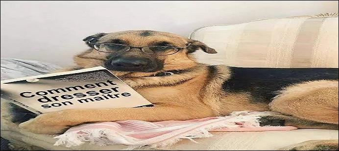 Commençons par une évidence ! Quelle illustration correspond au régime du chien ?