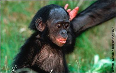 Quel est ce singe ?