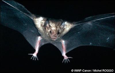 Quel est cet animal nocturne ?
